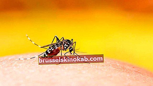 Dengue kan erbjuda immunitet mot Covid-19, säger forskning