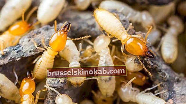 Hvordan avslutte termitten med 10 enkle tiltak