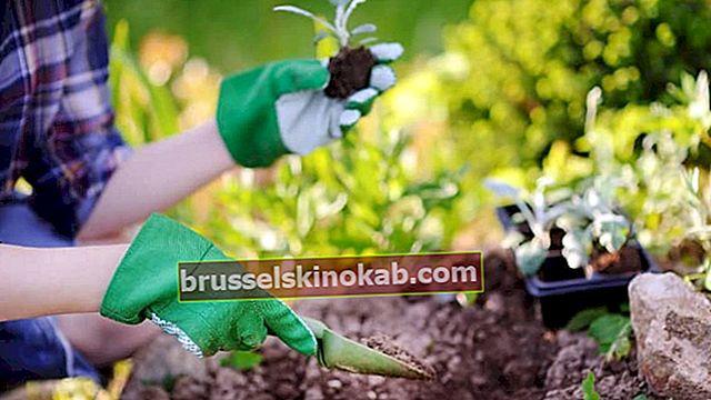 Trädgårdsskötsel och landskapsarkitektur: 6 knep för att underlätta uppgiften