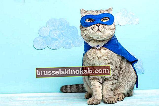 Αστείες γάτες ποζάρουν - τι λένε;