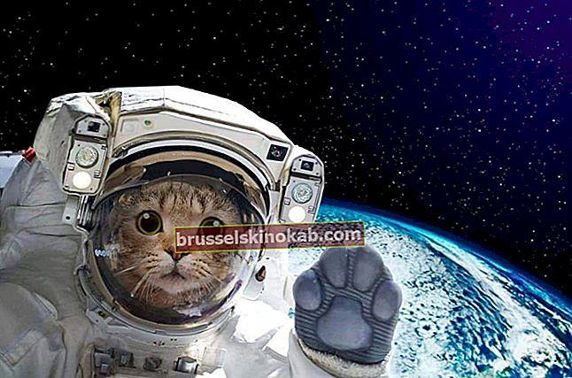 Οι αστείες ιστορίες με τις πιο εκπληκτικές γάτες στον κόσμο