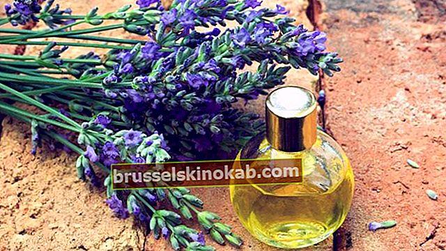 Lavendel: hvem kunne forestille seg at et legemiddel lukter så godt?