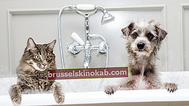12 tip til at afkøle dit kæledyr i varmen