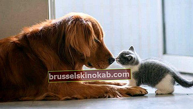 Μάθετε να φτιάχνετε παιχνίδια για γάτες και σκύλους στο σπίτι