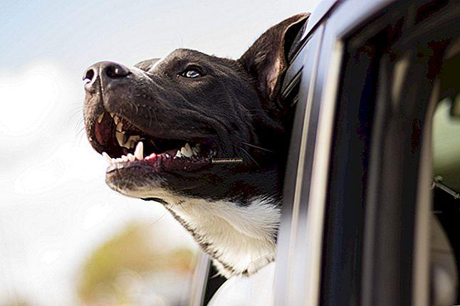 17 otroliga tips för att bättre förstå din hund